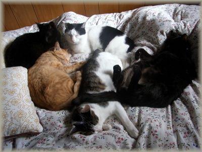 巨大猫団子