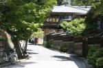 daily in Miyajima
