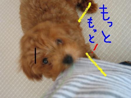moka11.jpg