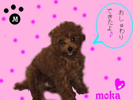 moka19.jpg