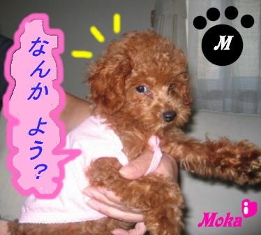 moka21.jpg