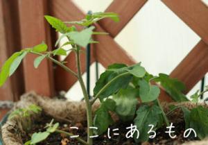 gardening010.jpg