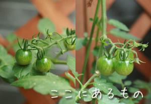 gardening012.jpg