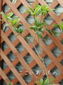 gardening013.jpg
