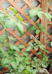 gardening016.jpg