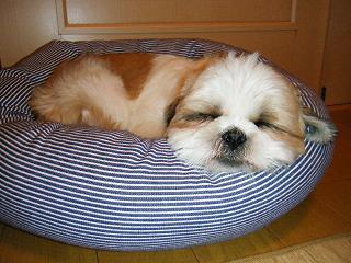 意外に寝心地いいベッドだぜぇ