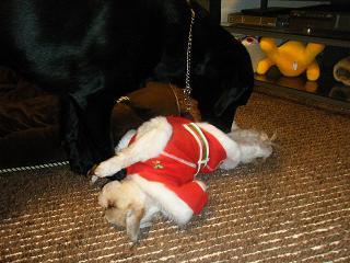 サンタ姿にムラッとするでしょ~ん♪