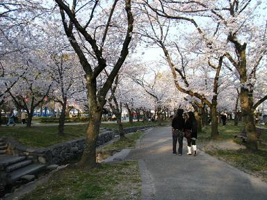 母ちゃんもナウなヤングと桜並木歩きた~い!