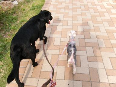 散歩の時は並んで歩けるねんけど・・・