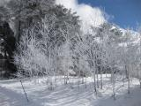 201001265_snow