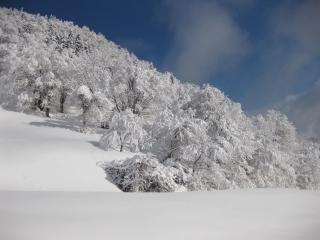 201002137_snow