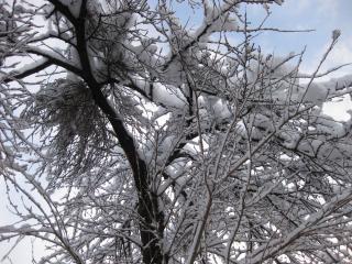 201002221_snow