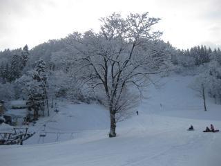 201002231_snow
