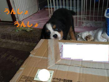 2008_0920_154019-P9201191.jpg