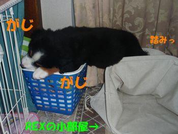 2008_1001_194519-PA010110.jpg