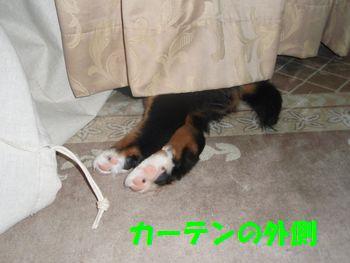 2008_1001_204752-PA010116.jpg