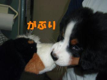 2008_1003_233736-PA030194.jpg