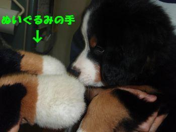 2008_1003_233853-PA030203.jpg