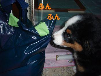 2008_1004_202853-PA040256.jpg