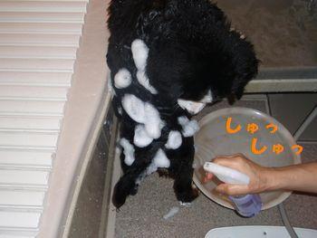 2008_1005_154344-PA050019.jpg