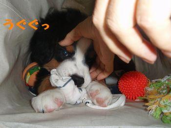 2008_1006_071941-PA060090.jpg