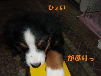 2008_1006_201230-PA060096.jpg