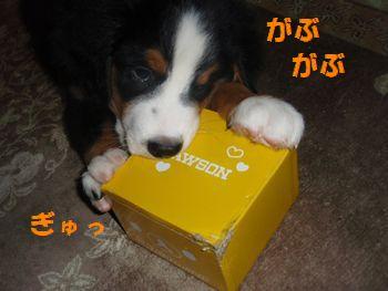 2008_1006_201247-PA060098.jpg