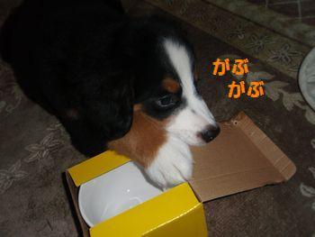 2008_1006_201337-PA060103.jpg