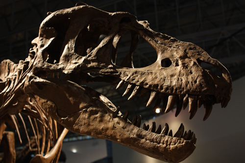 幕張 恐竜展