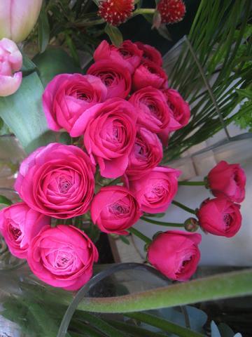 ラナン切り花