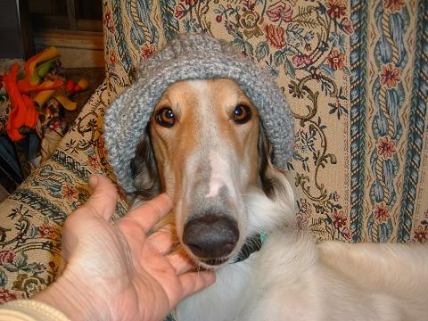 テイラー帽子 0020001