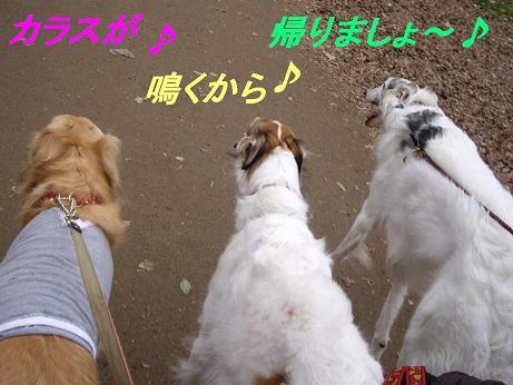 深大寺ドッグラン 018p