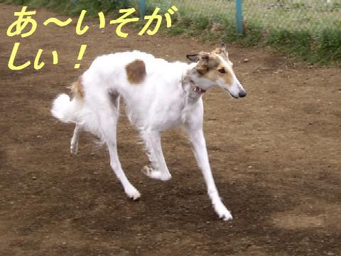 深大寺ドッグラン 007p