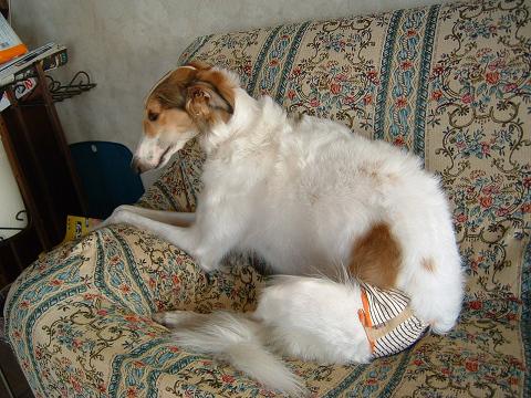 おパンツ犬 0010008