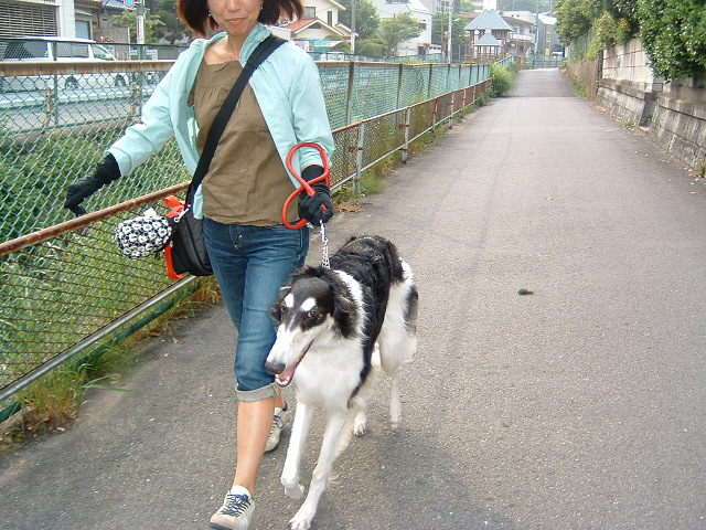 ニケちゃんちのお散歩10002