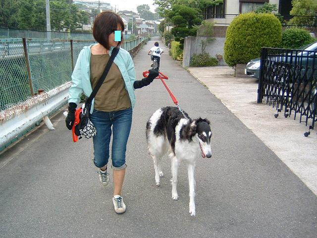 ニケちゃんのお散歩0001