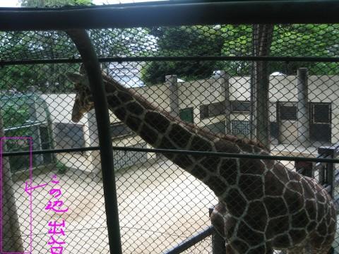 IXY画像20081223 0010-1