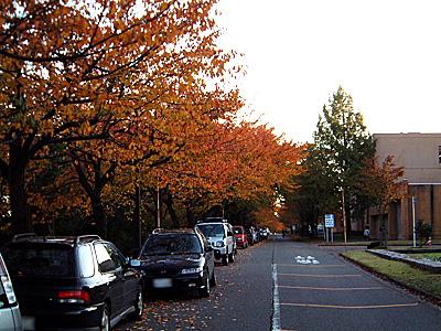 技大の桜並木の紅葉