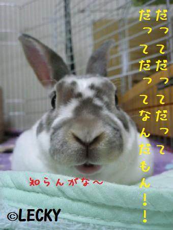 s1170494.jpg