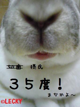 s1290476.jpg