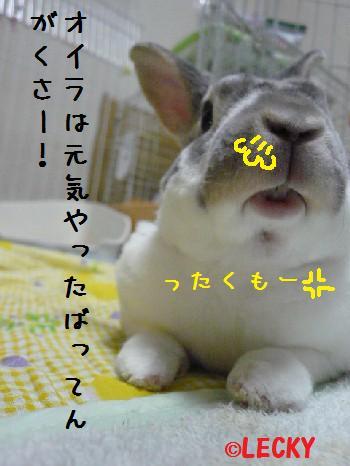 s1300685.jpg