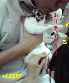 tsumekiri201111201.jpg