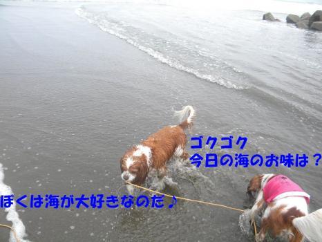 DSCN2222c.jpg