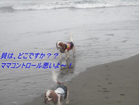 DSCN2858f_20100924155659.jpg