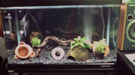 2009 12/31 熱帯魚水槽
