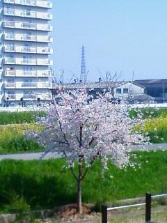 NEC_1321.jpg