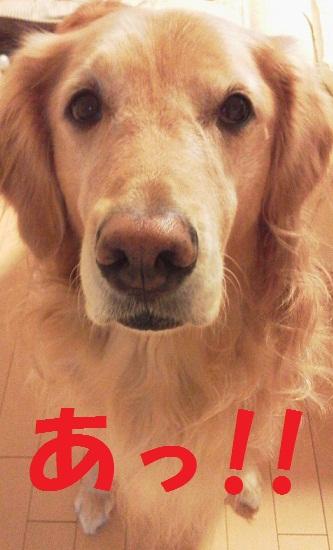 2011111107330002.jpg
