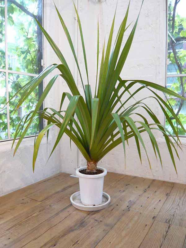 小さな植物から大きな植物までございますので