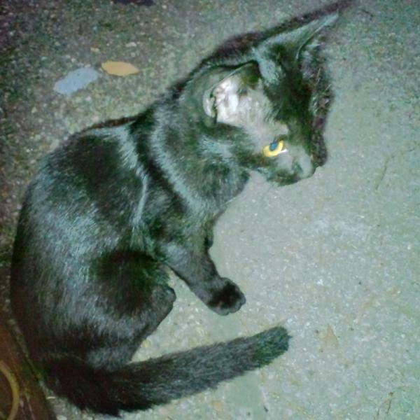 猫公園黒子猫