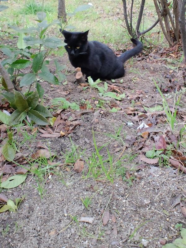 猫公園黒猫8